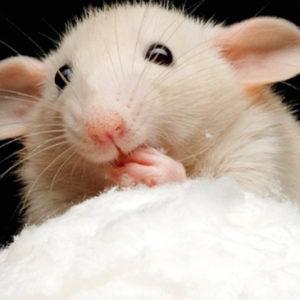Белая Крыса придет за нашим кошельком: что подорожает в Новом году
